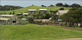 Ace Hi Riding Ranch - Accommodation Mooloolaba