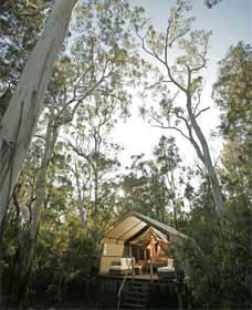 Paperbark Camp - Accommodation Mooloolaba