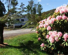 Zeehan Bush Camp  and Caravan Park - Accommodation Mooloolaba