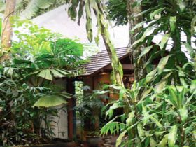 Heritage Lodge and Spa - In the Daintree - Accommodation Mooloolaba