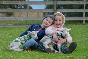 Narnu  Farm Farm stay/ School Camp - Accommodation Mooloolaba