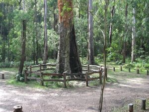 Six Mile Creek campground - Accommodation Mooloolaba