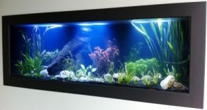 Aquariums in Cairns - Accommodation Mooloolaba