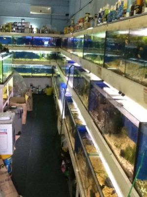 Clearwater Aquariums - Accommodation Mooloolaba