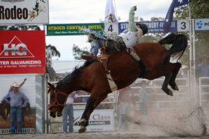 Stroud Rodeo and Campdraft - Accommodation Mooloolaba