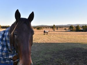 Clydesdale Cottage on Talga with real Clydesdale Horses - Accommodation Mooloolaba