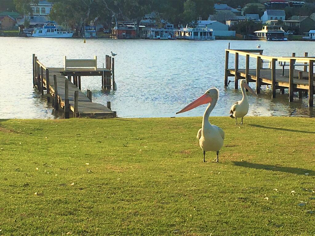Riverfront Getaway - Mannum - Accommodation Mooloolaba